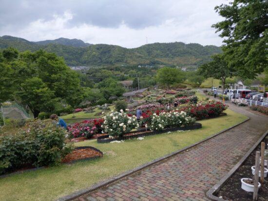 錦江湾公園の花をイメージする絵